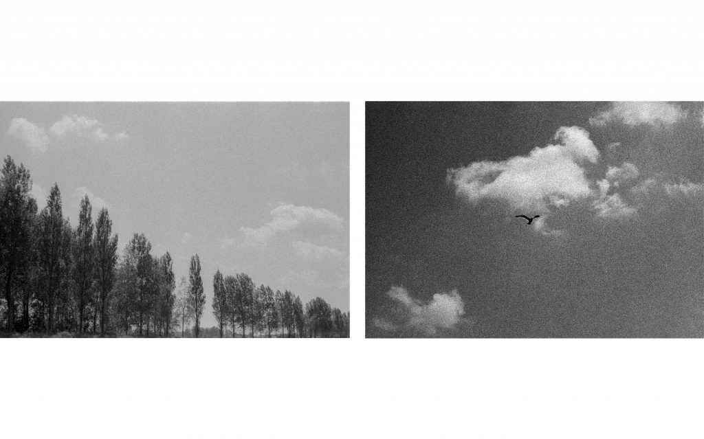 Mera Dorin Photography Fotografie Analog
